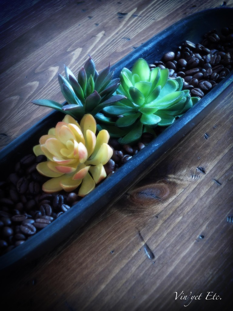 Succulents & Coffee beans | Vin'yet Etc.